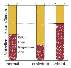 verteilung-mikronaehrstoff-mit-unterschiedlichem-haematokrit